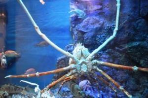 ★竹島水族館が、マツコの知らない世界で紹介されました!