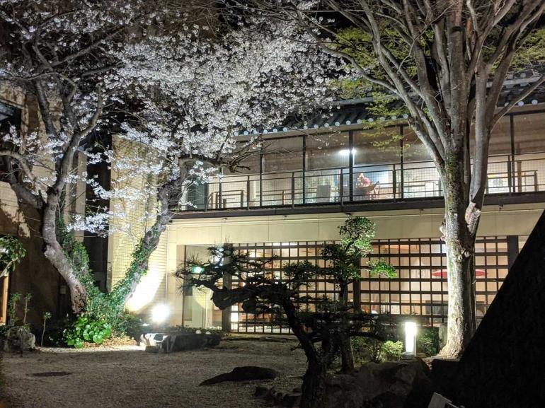 平野屋の桜が満開になりました!
